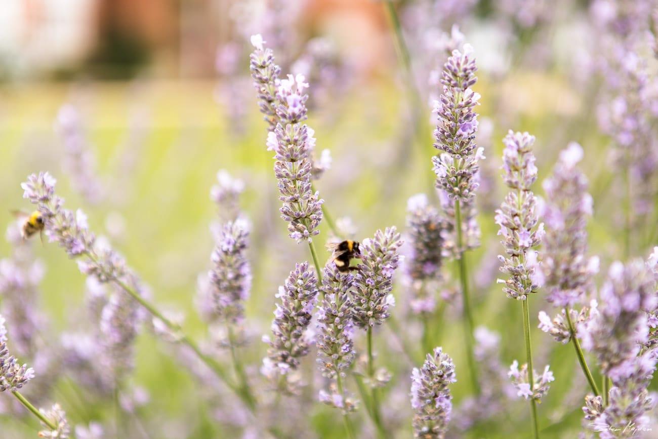 swancar-farm-wedding-photography-2.jpg