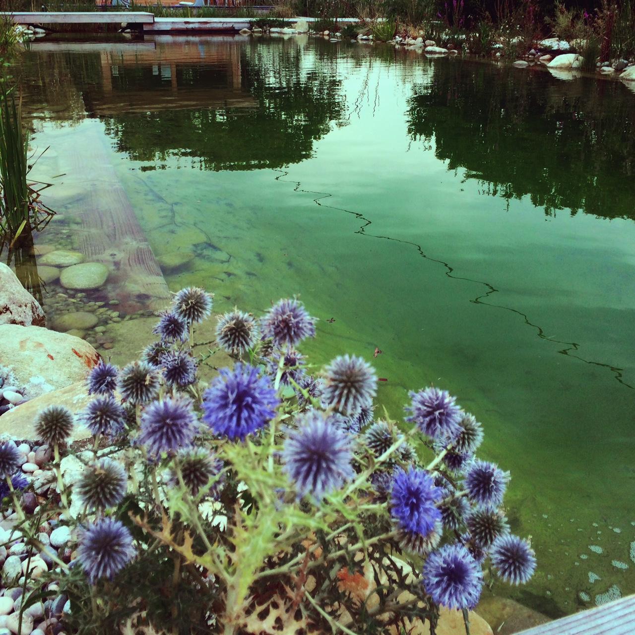 piscine chardon.JPG