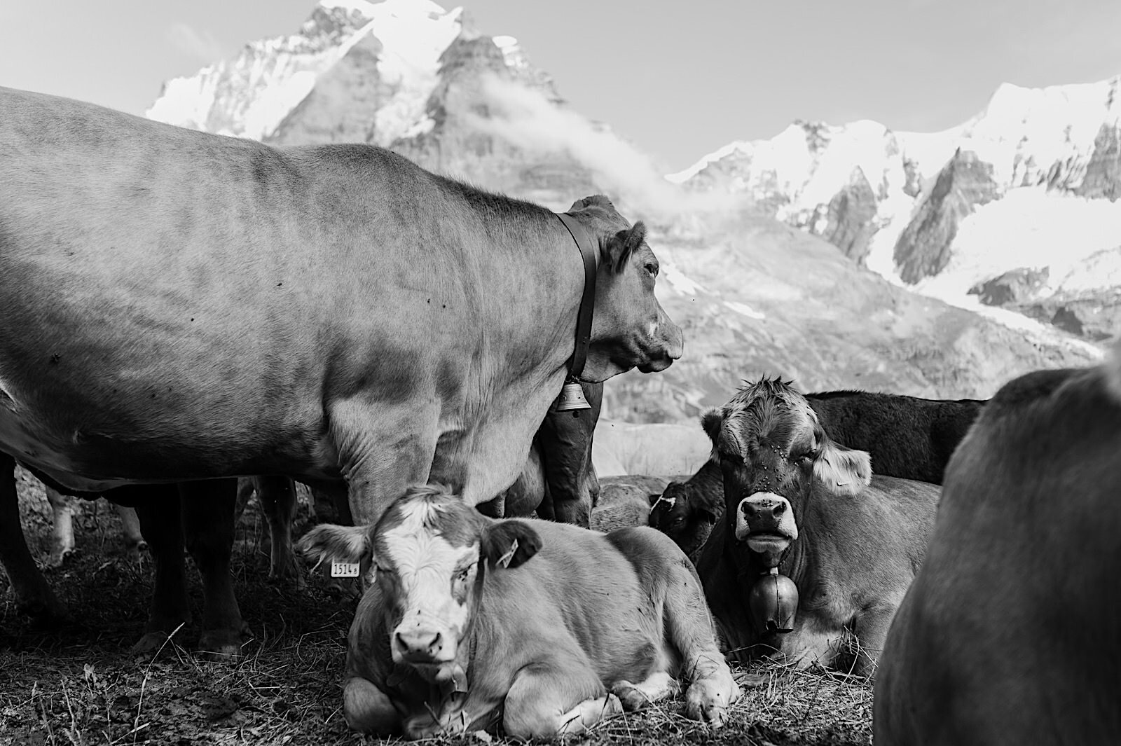 Swiss Alps Photographer Murren Fotomagoria 22.jpg