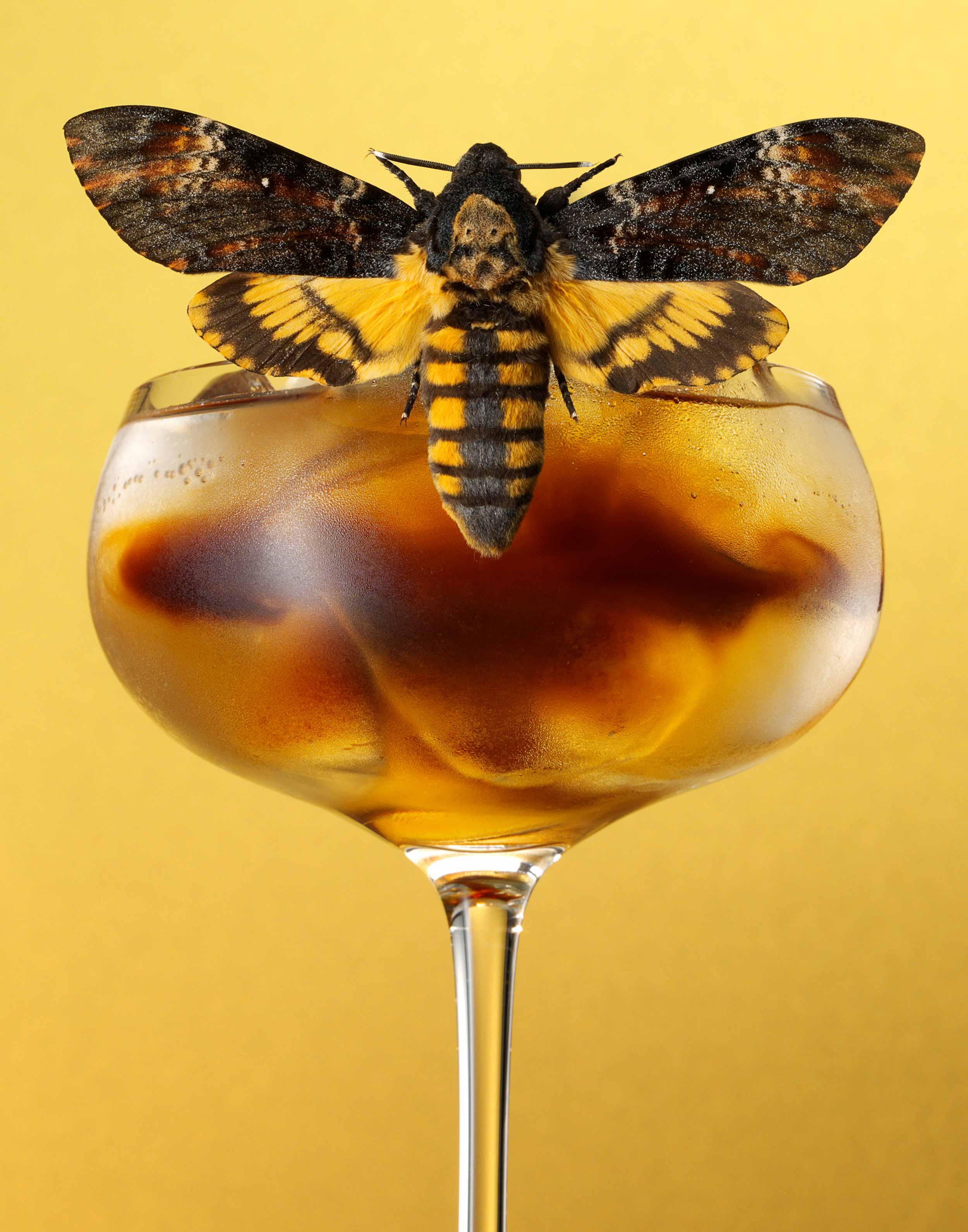 Moth-Cocktail---Espresso-Tonic-FRTc11x14.jpg