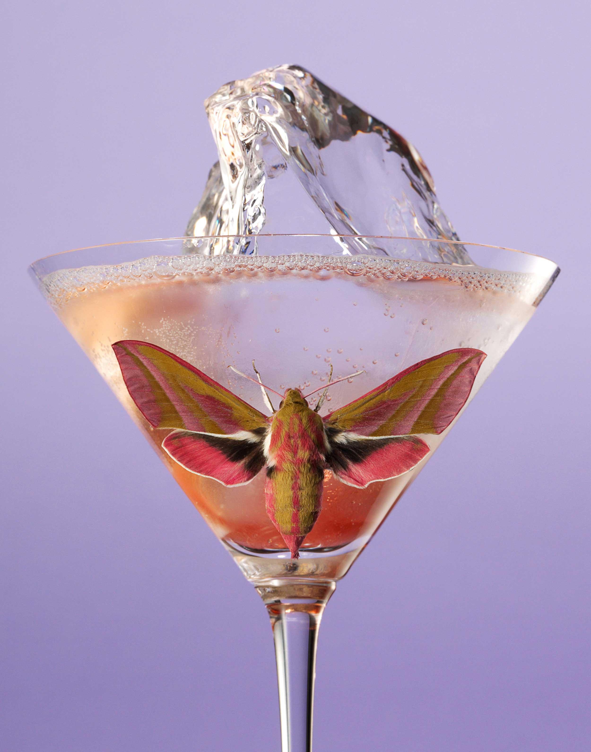 Moth-Cocktail---Purple-Ice-FRTc11x14.jpg