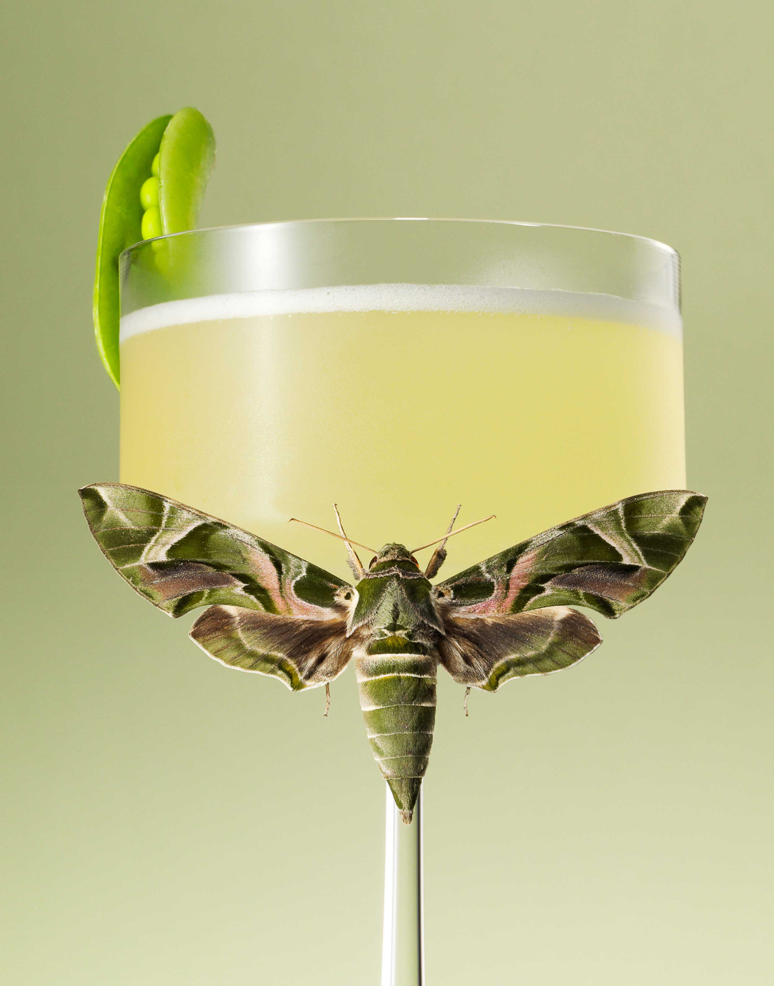 Moth-Cocktail---Pea-and-Mint-FRTc11x14.jpg
