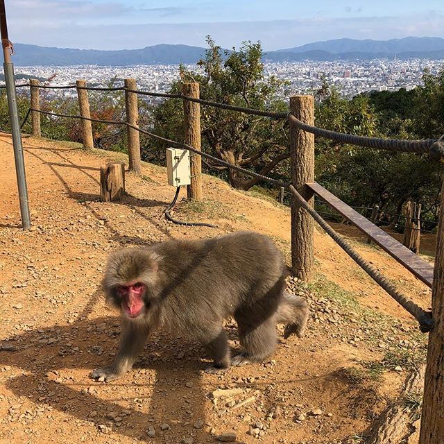 I have seen monkey 🐒