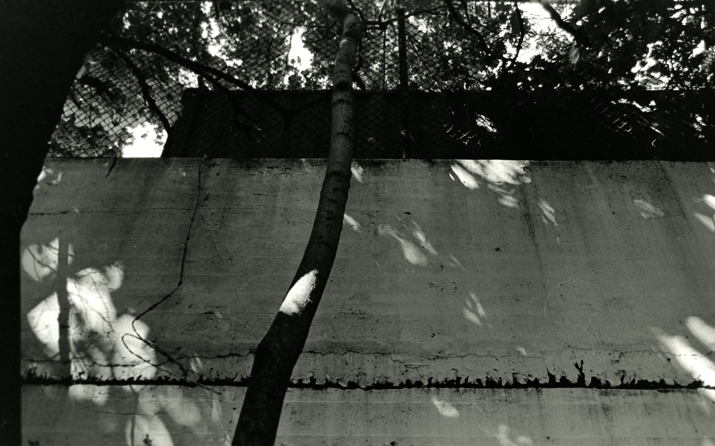 35mm black and white photograph, 2012
