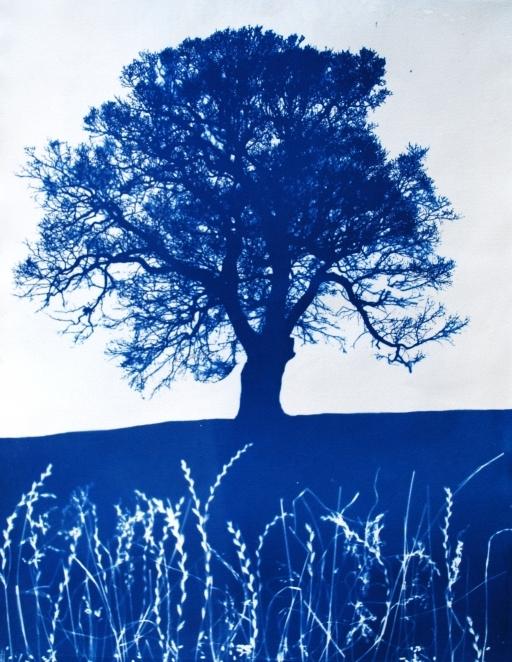 brockwell-park-oak-a4-cya-noty-d1898.jpg