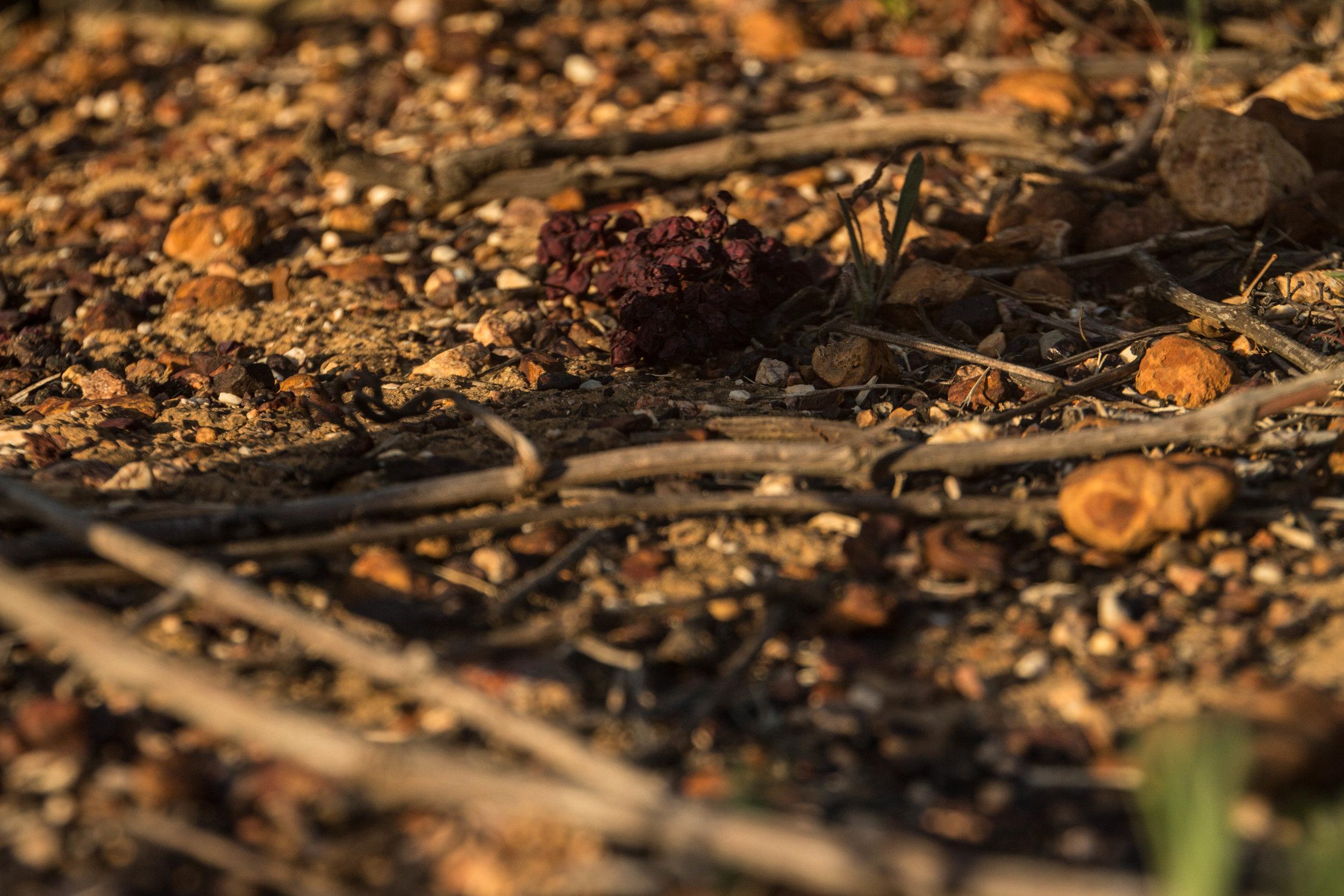 Bouchard Finlayson-Soil 3.jpg