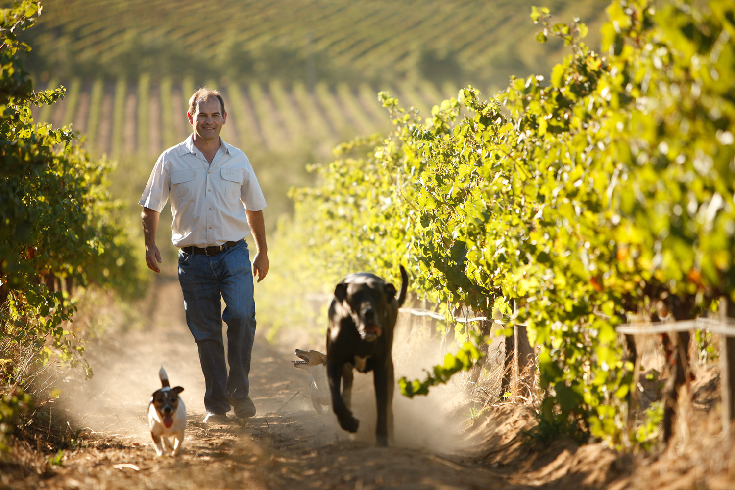 La Motte Cellar Master - Edmund Terblanche with dogs (4).jpg