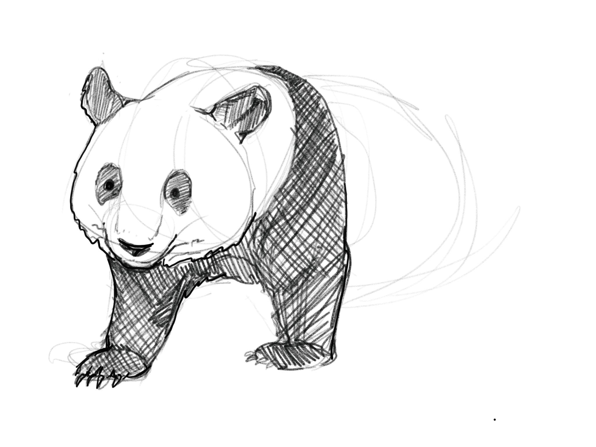 PandaDrawing.png