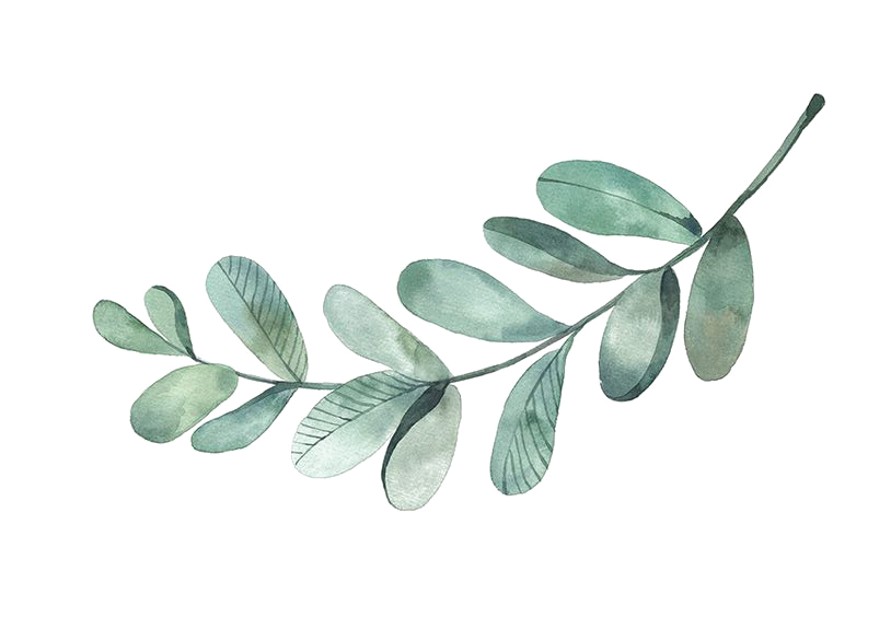 branch-drawing-water-colour.png