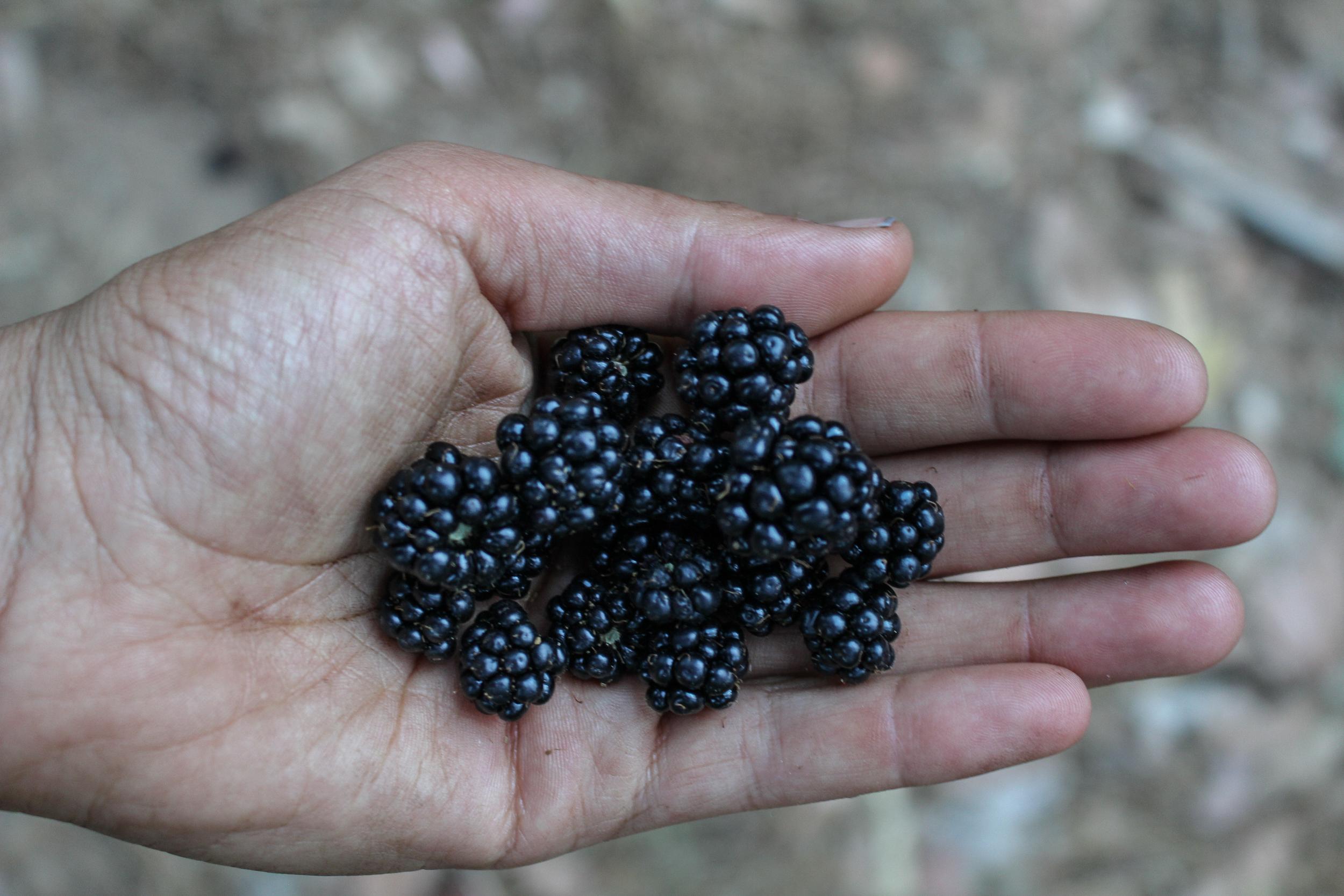 travel photography blog california wildberries alyssa ackerman hipcamp