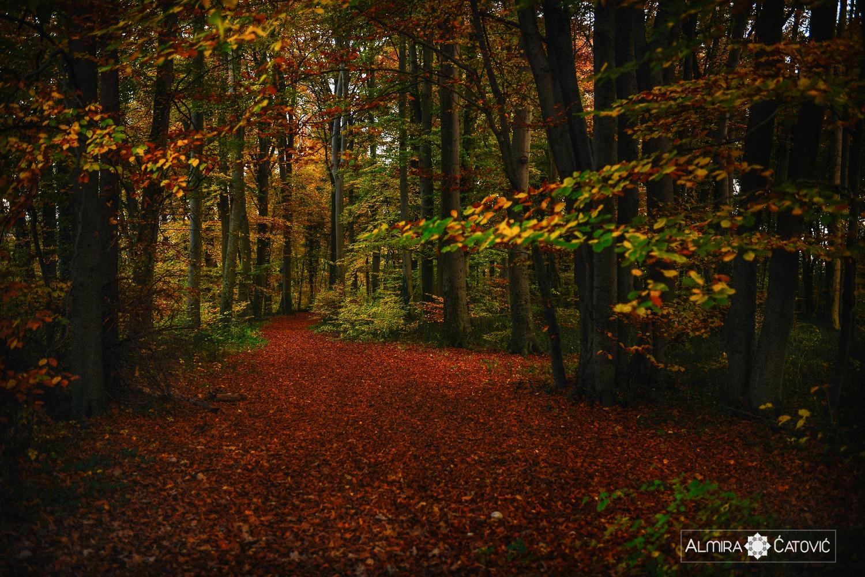 Almira Catovic_ Nature (2).jpg