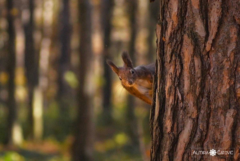 Almira Catovic_ Nature (5).jpg