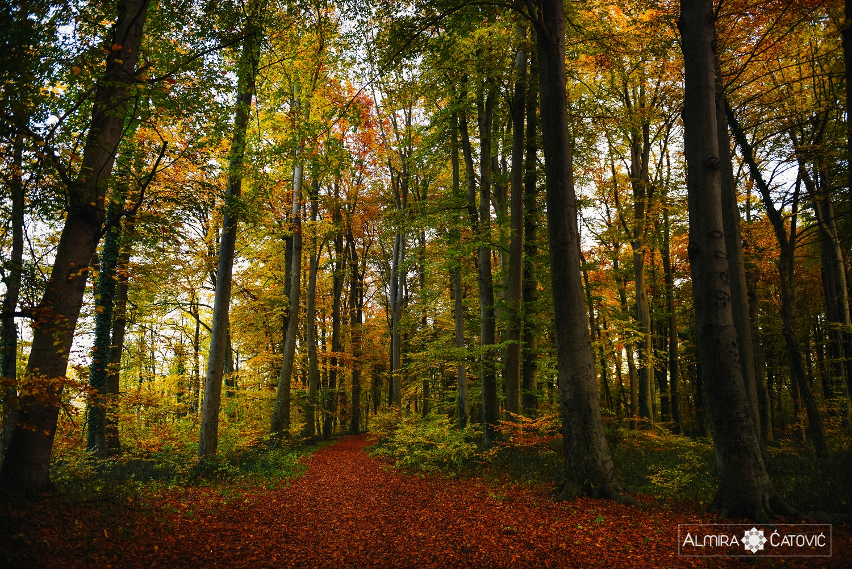 Almira Catovic_ Nature (6).jpg