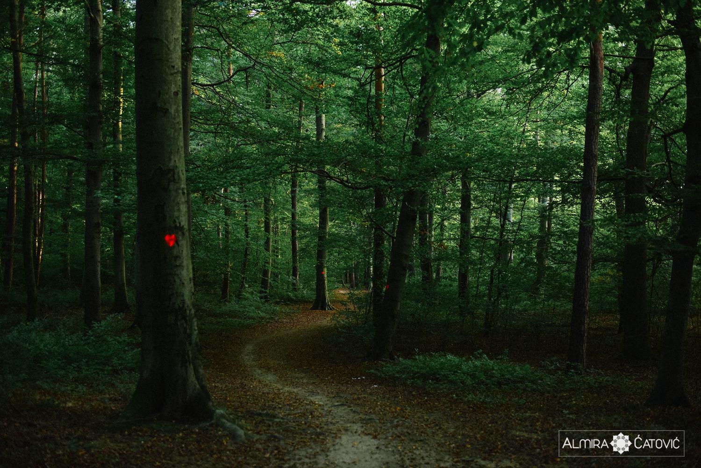 Almira Catovic_ Nature (8).jpg