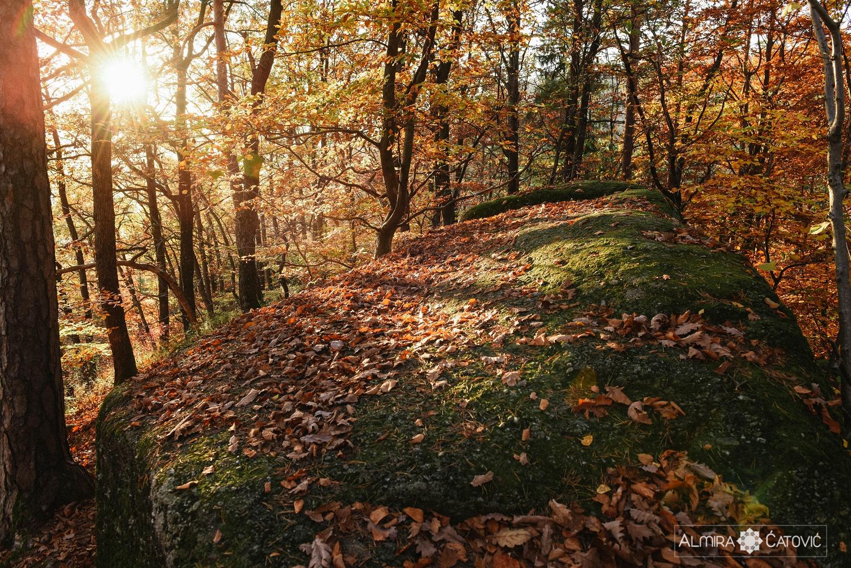 Almira Catovic_ Nature (23).jpg