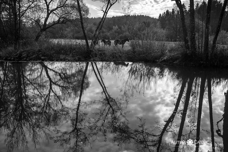 Almira Catovic_ Nature (28).jpg
