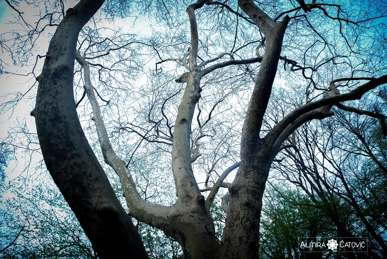 Almira Catovic_ Nature (47).jpg