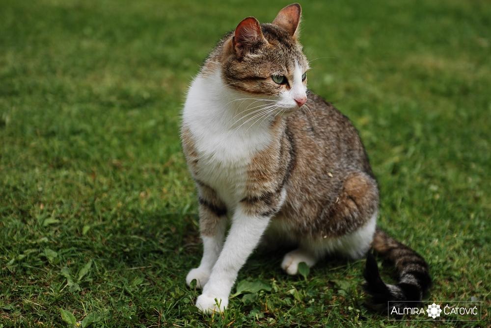 Almira-Catovic-Cats (4).jpg