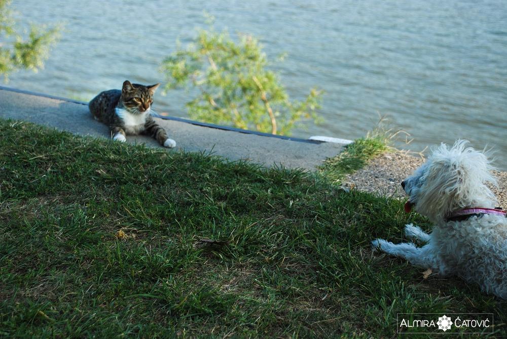 Almira-Catovic-Cats (7).jpg