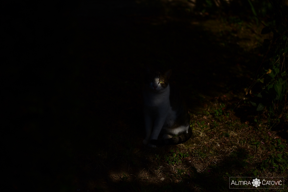 Almira-Catovic-Cats (9).jpg