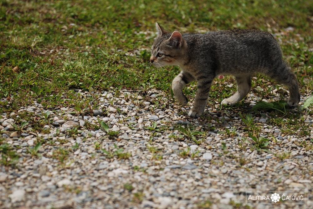 Almira-Catovic-Cats (12).jpg