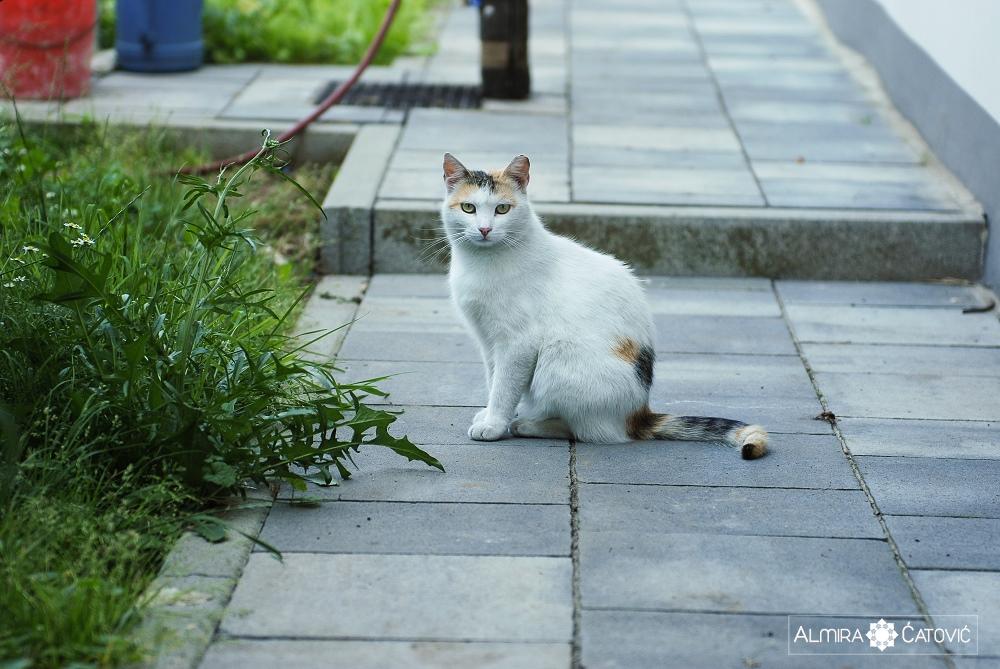 Almira-Catovic-Cats (13).jpg