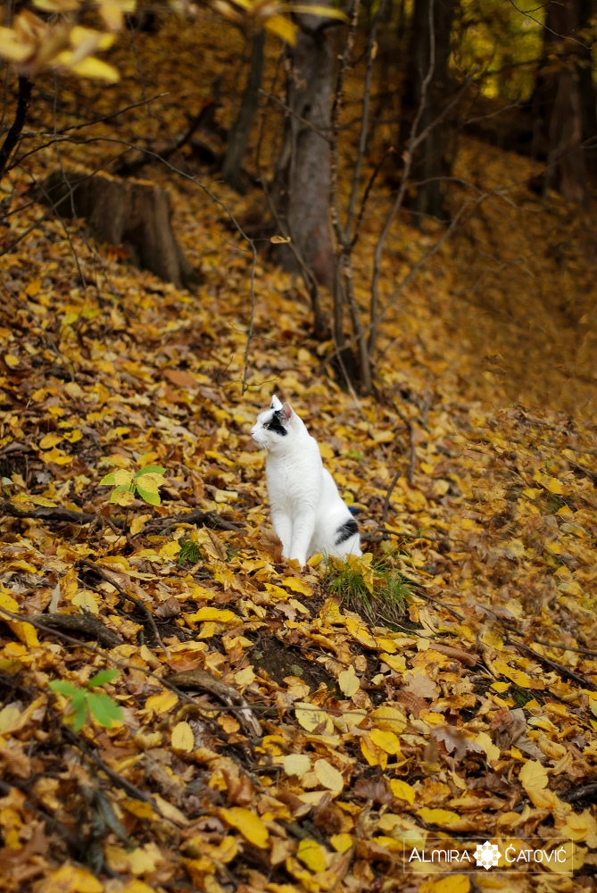 Almira-Catovic-Cats (17).jpg