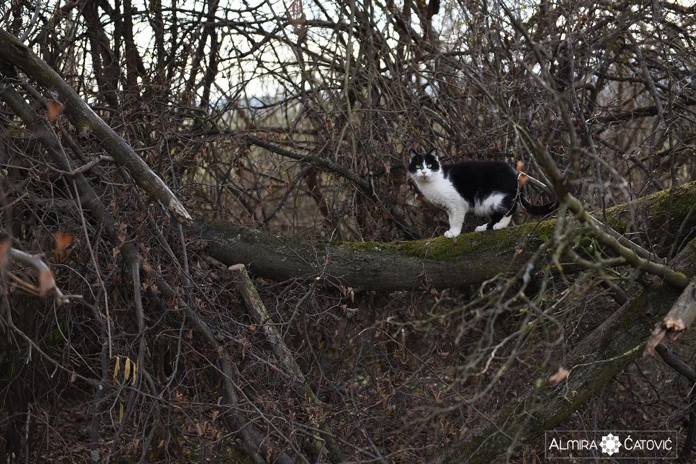 Almira-Catovic-Cats (19).jpg