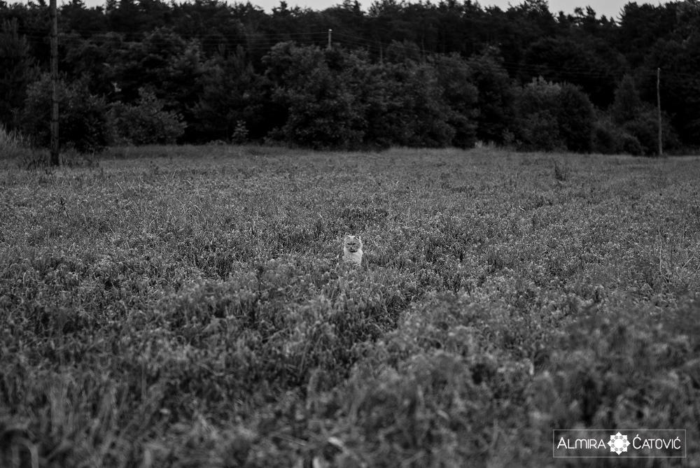 Almira-Catovic-Cats (25).jpg