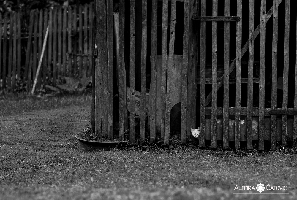 Almira-Catovic-Cats (27).jpg