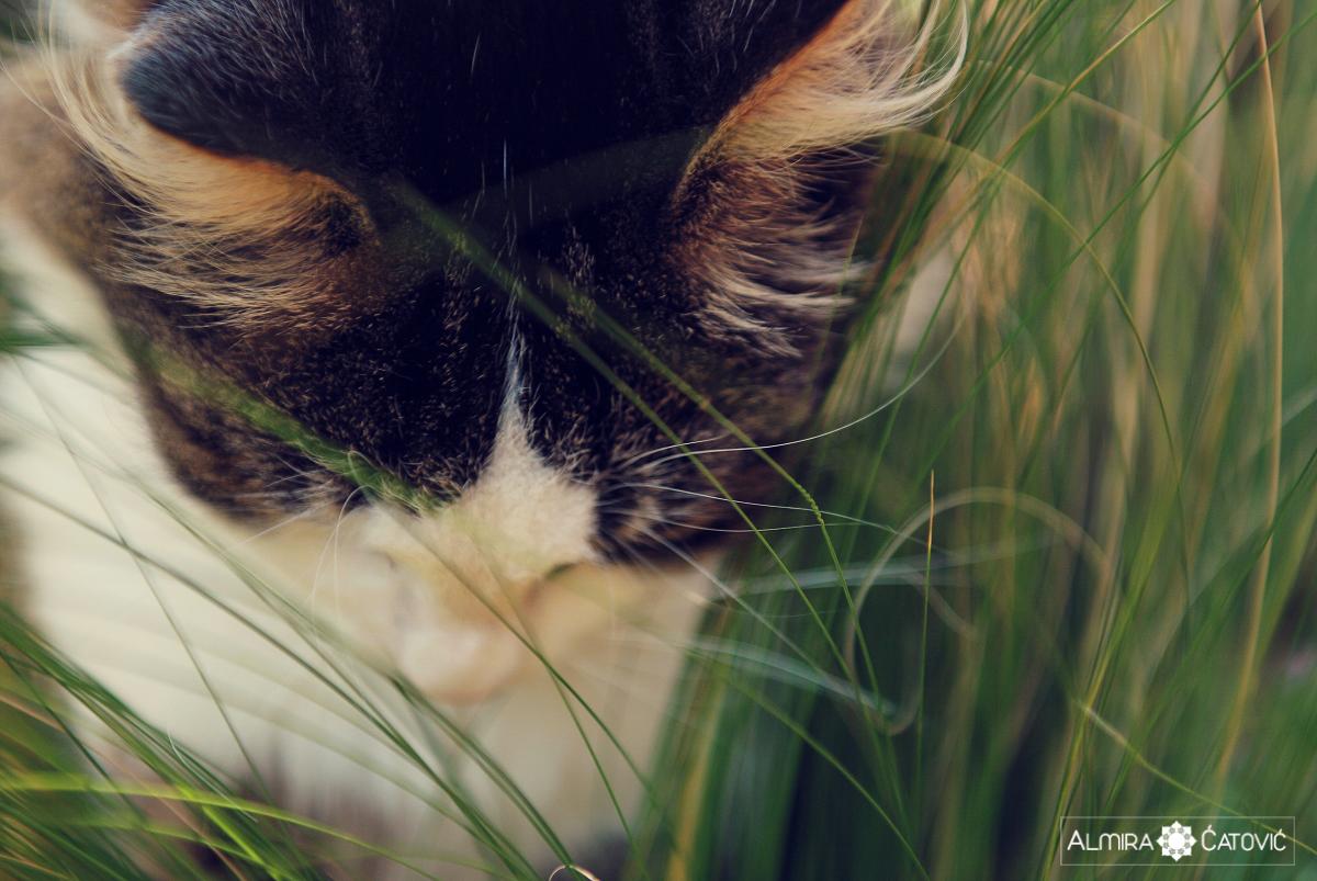 Mačke (1).jpg