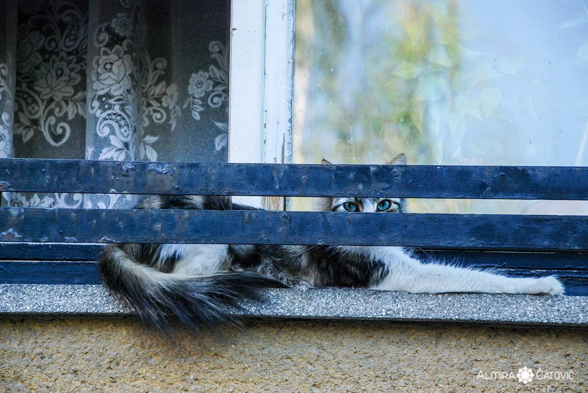 Mačke (5).jpg