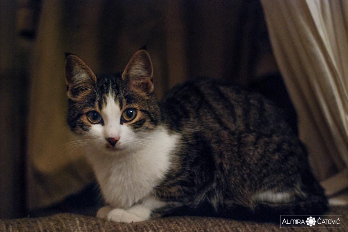 Mačke (26).jpg