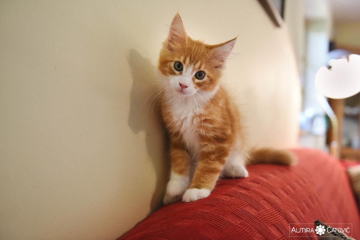 AlmiraCatovic-Cat (9-6) (2).jpg