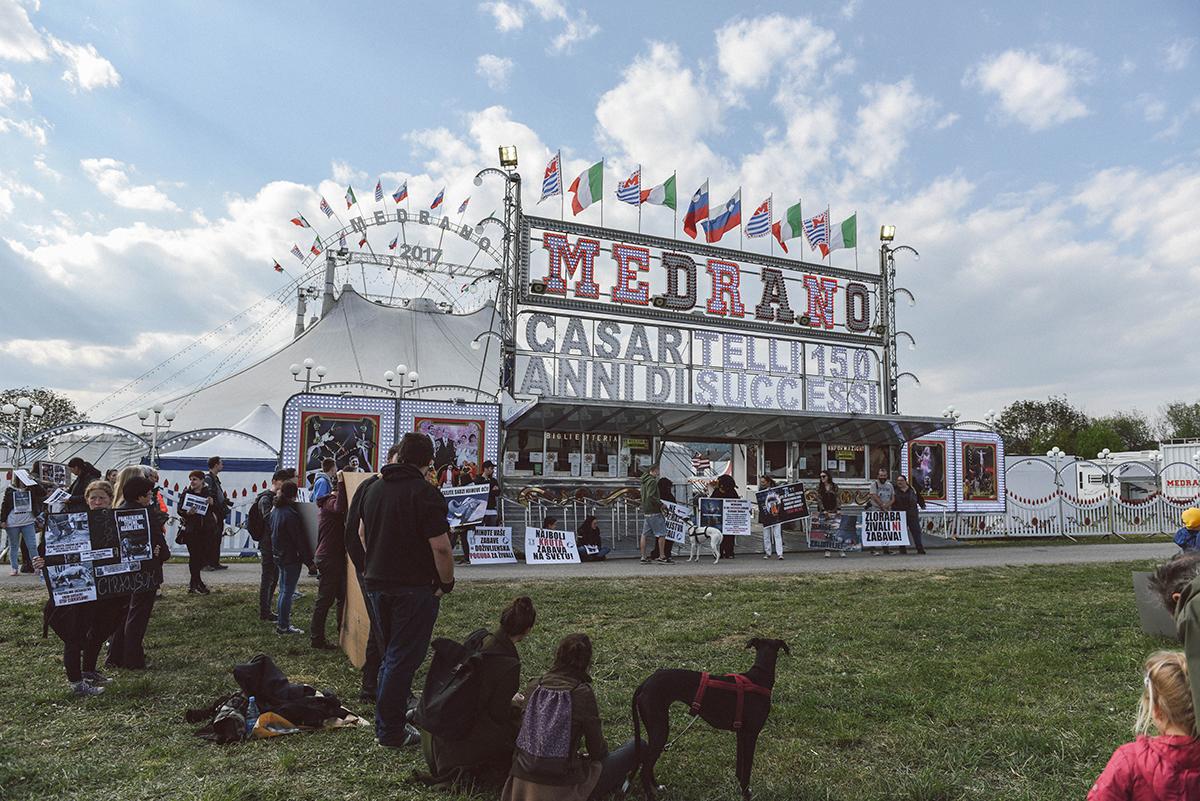 Zakaj takšen cirkus glede cirkusa - Italijanski cirkus Medrano velja za enega najstarejših evropskih cirkusov in v svojem repertoarju ponuja zraven domačih živalih nastop tudi eksotičnih; in ravno zaradi slednjih je direktorju tega cirkusa v Padovi bila izrečena zaporna kazen, saj je povzročal fizično in psihično trpljenje.