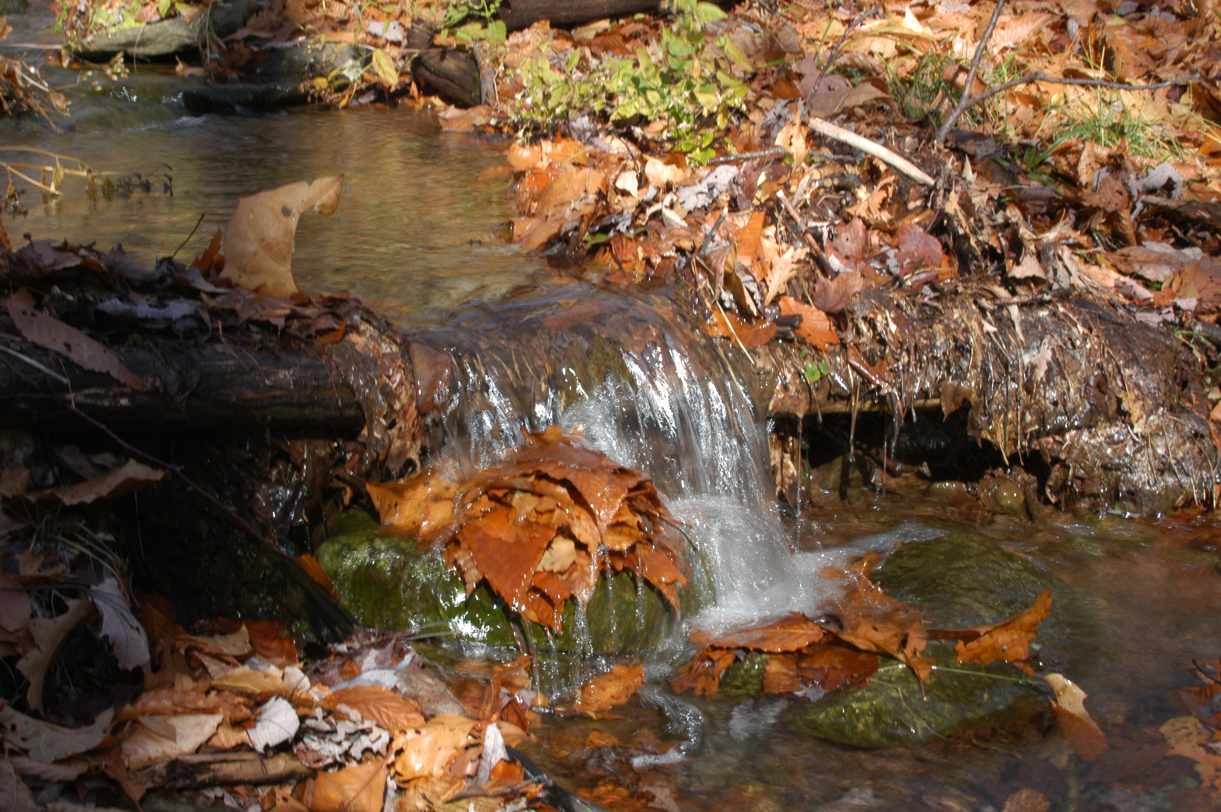 waterfall fall leaves.jpg