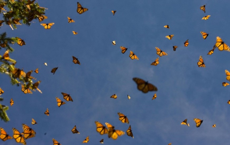 butterflies-crop.jpg