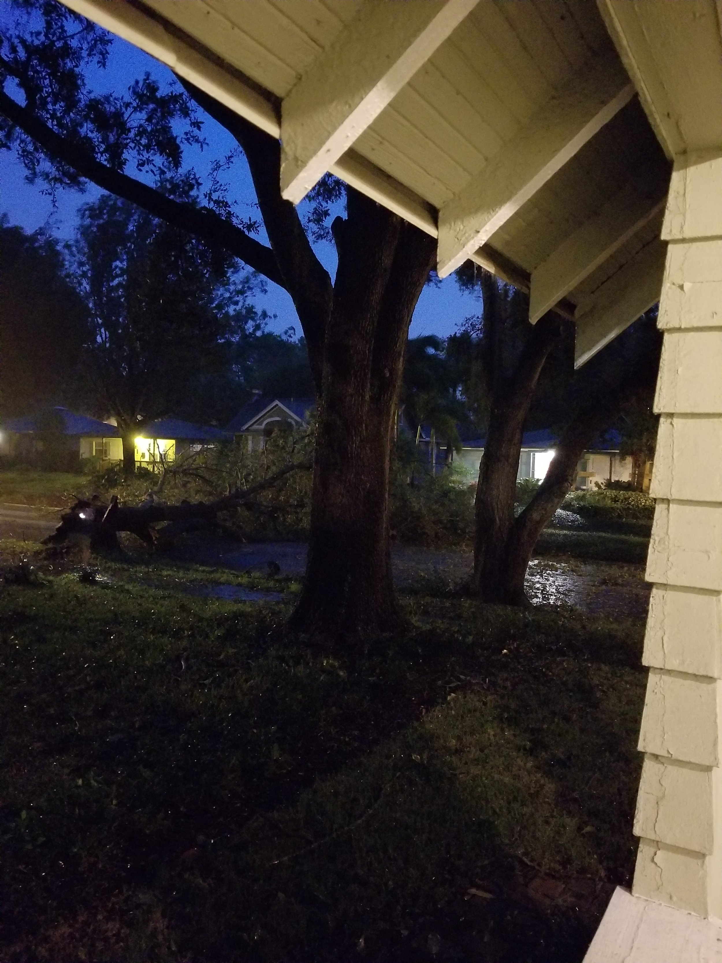 Tree falls during Irma view from our porch