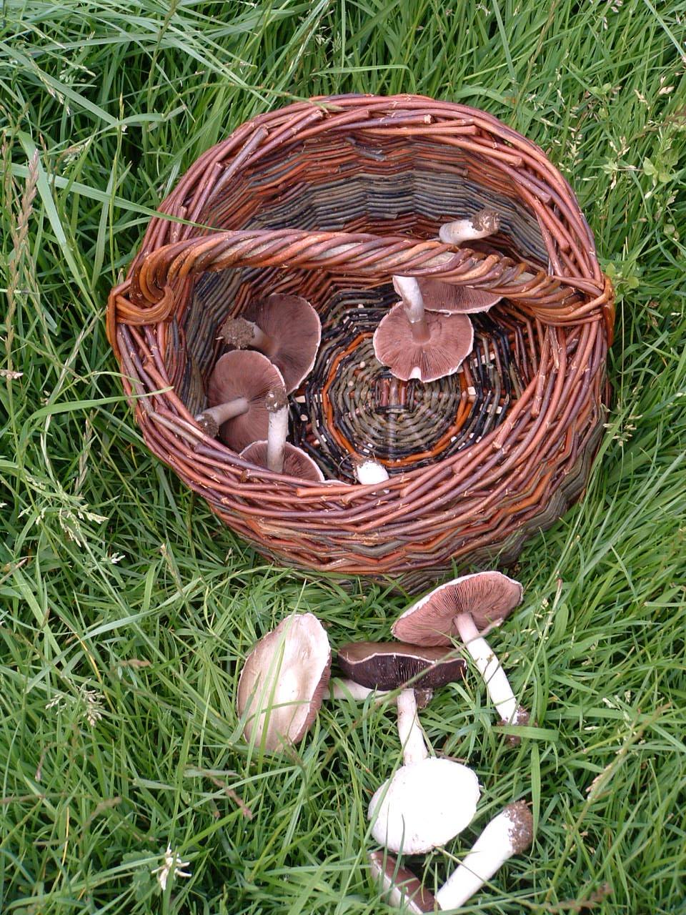 Home Grown Basket & Mushrooms