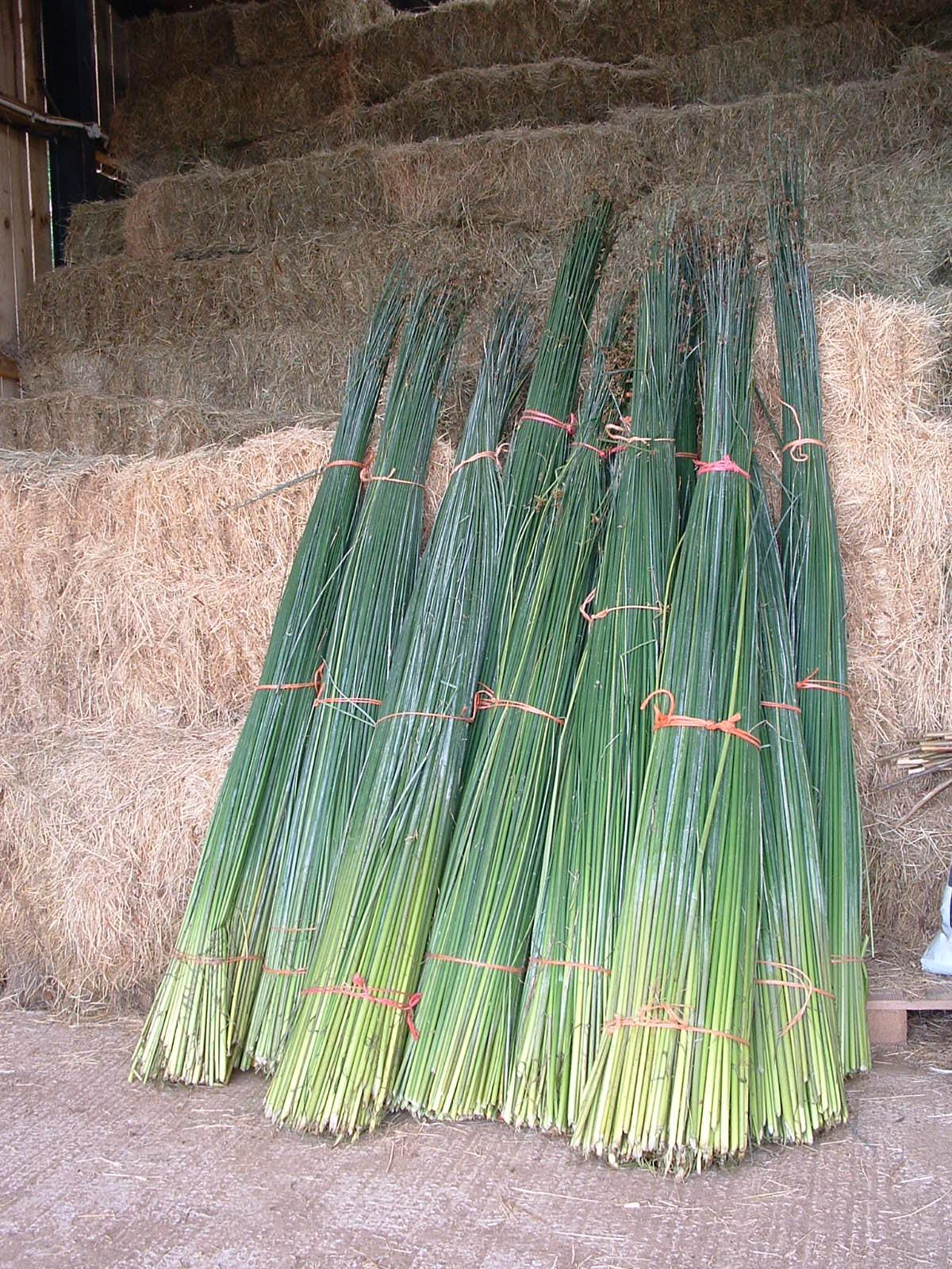 Harvested Rush Bundles