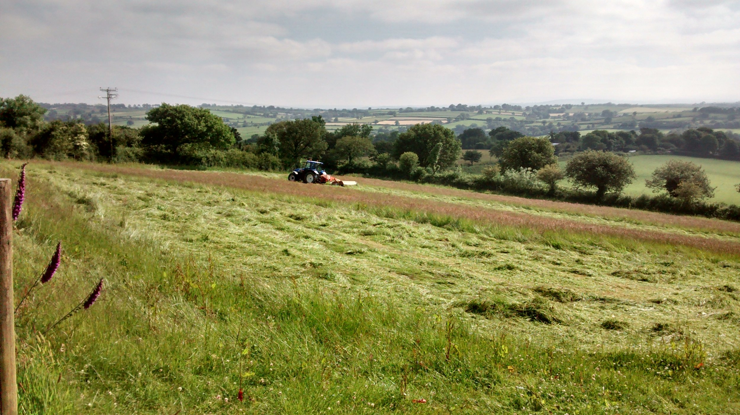 Mowing Grass for Silage