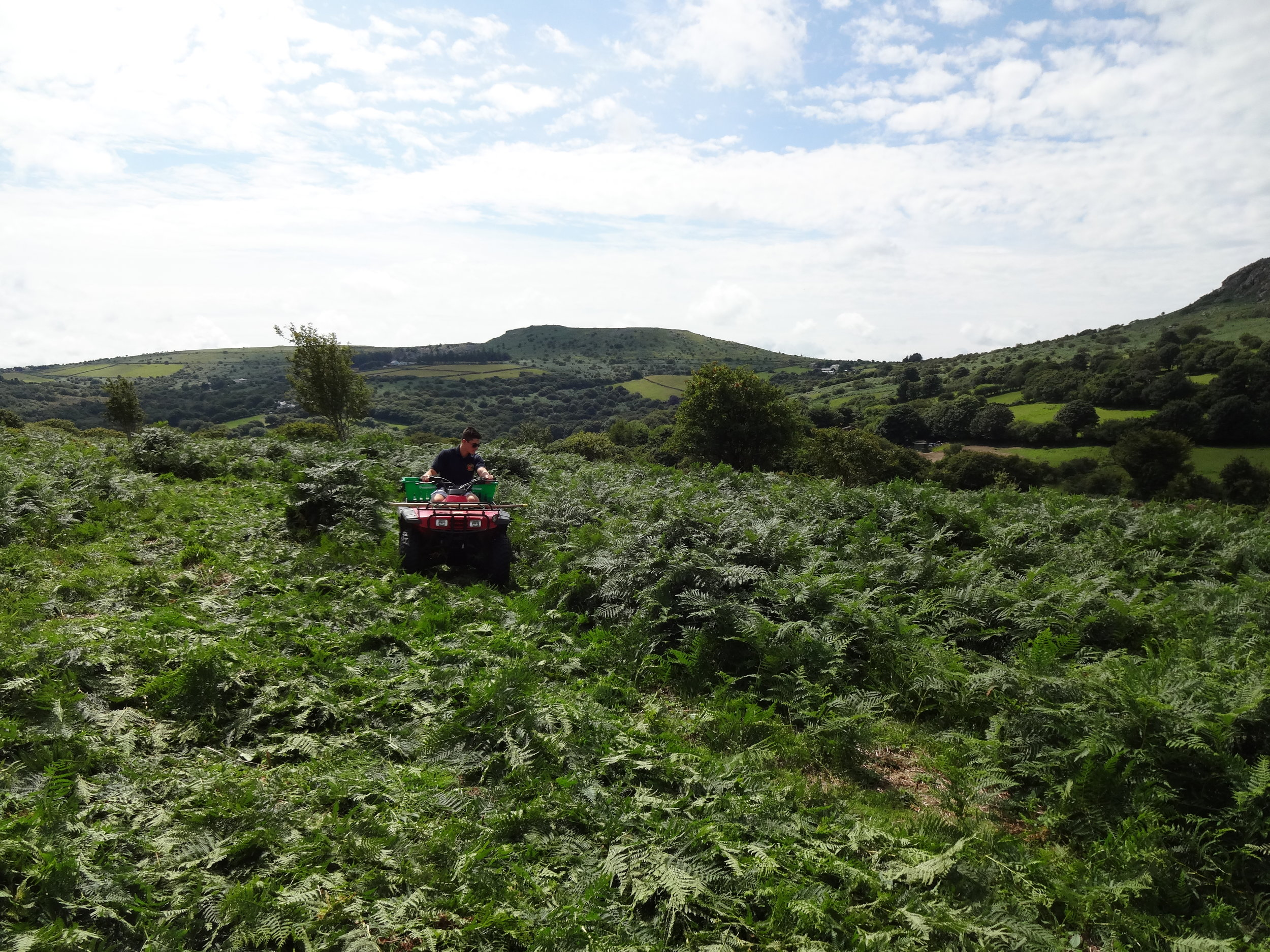 Bracken Bashing on Notter Tor