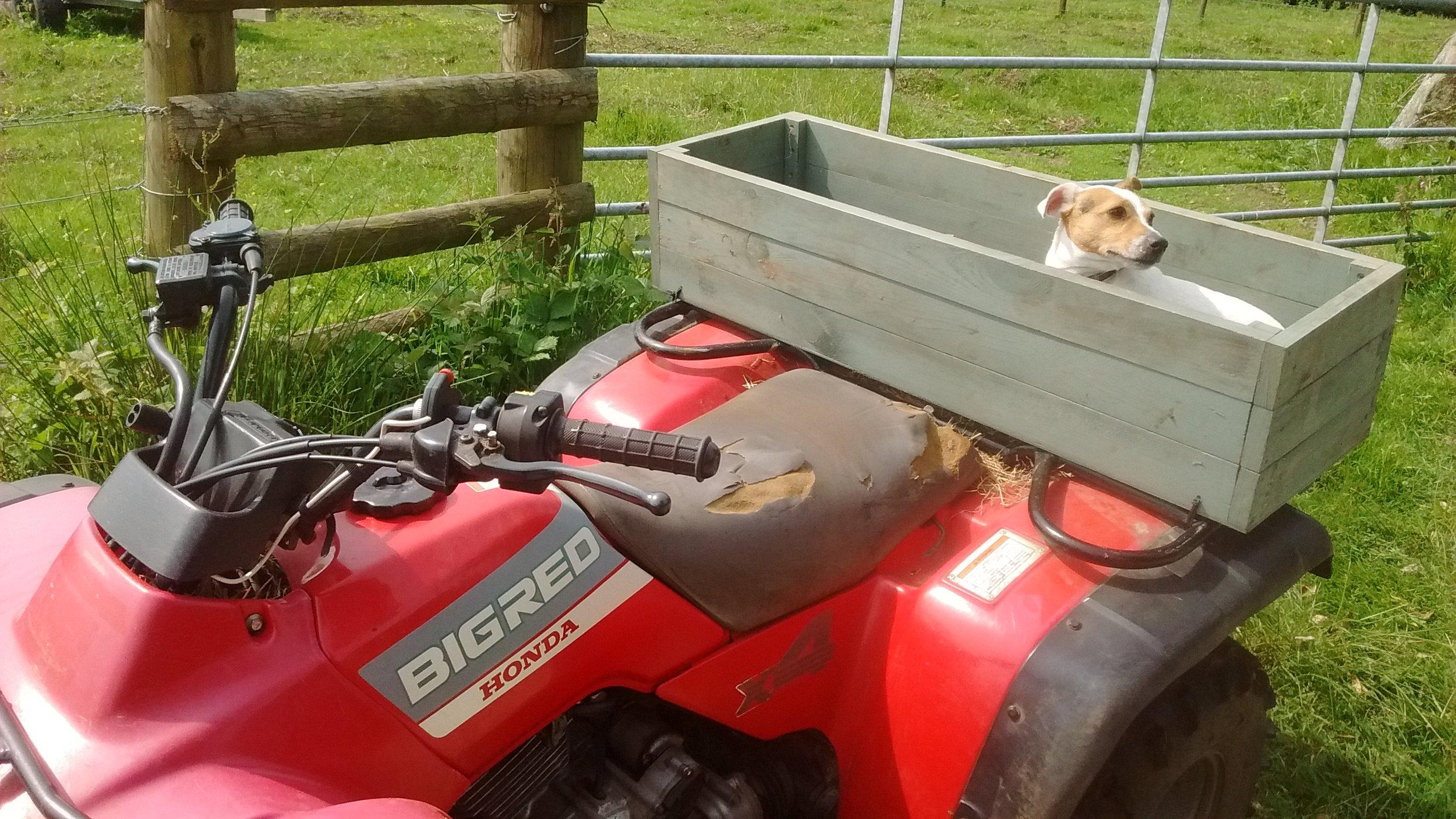 Poppy Ready for a Ride