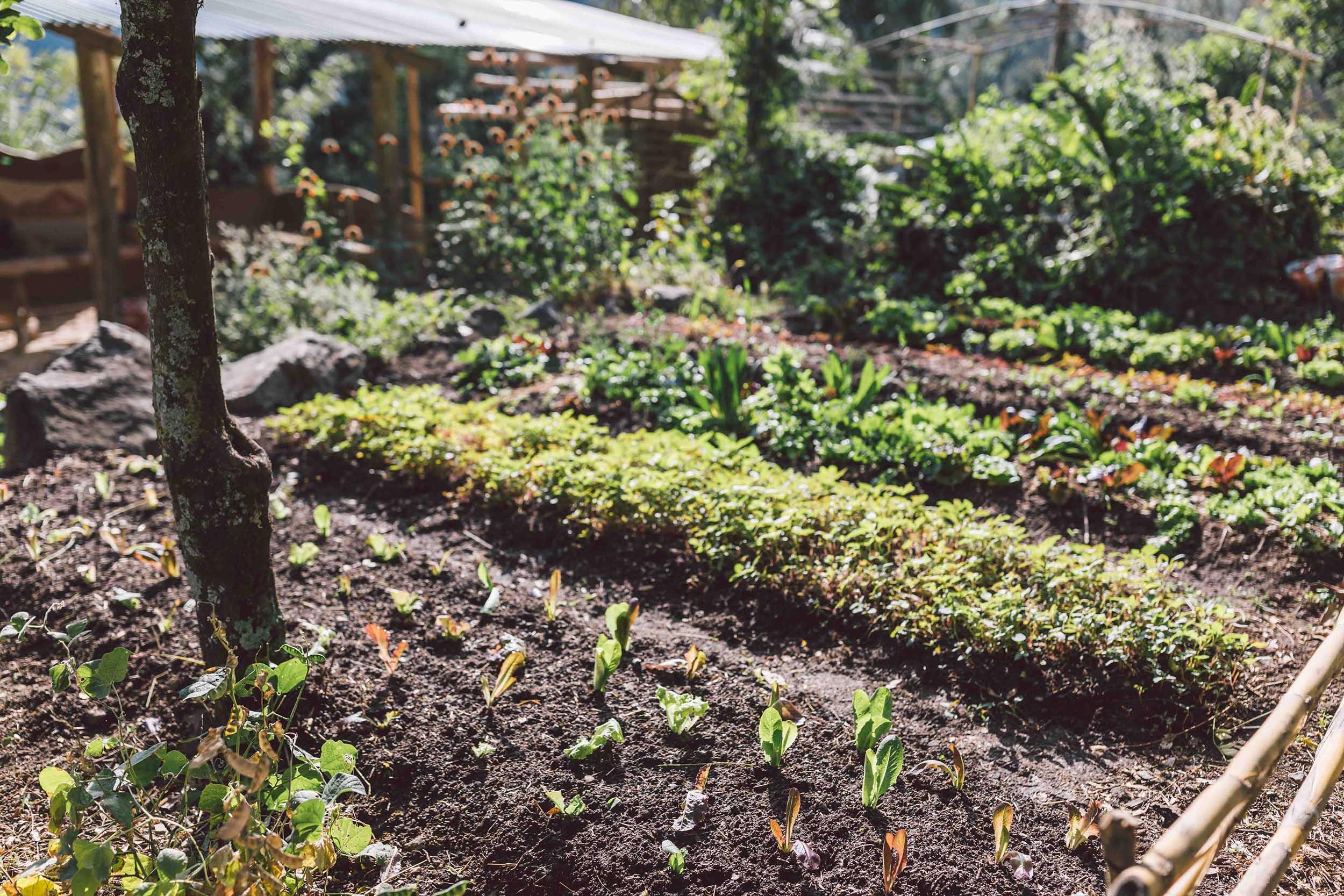 csa-permaculture-garden-organic