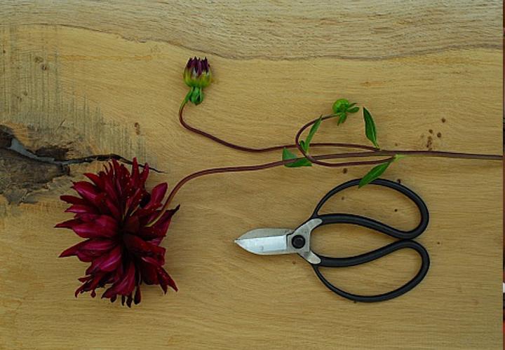 Jake Hobson - Våra japanska trädgårdsverktyg är framtagna i samarbete med den brittiske beskärningsexperten och trädgårdsskulptören Jake Hobson, som driver företaget Niwaki. Verktygen är tillverkade i Japan och håller i minst en livstid om de tas om hand och slipas då och då. [...]