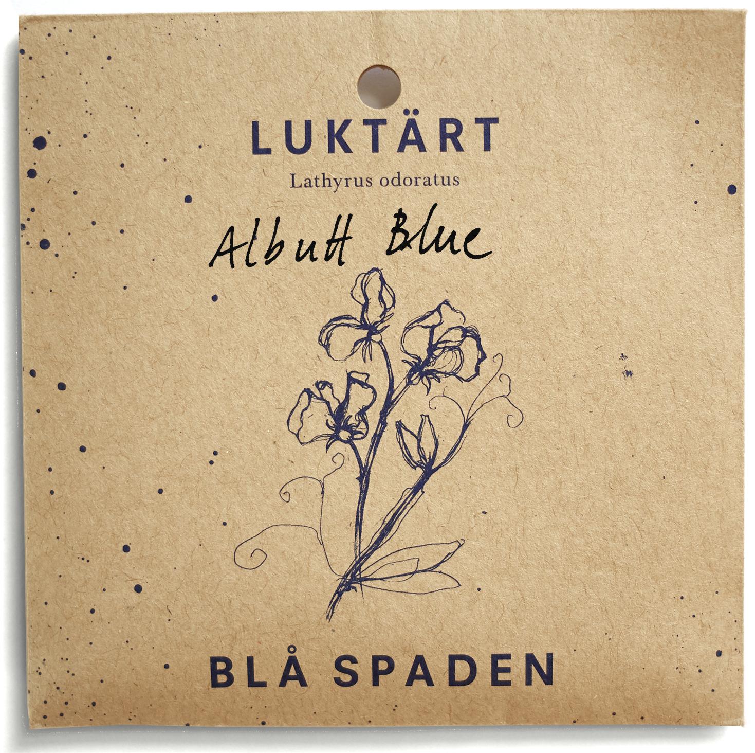 Albutt Blue - Ljuvlig luktärt som doftar gott. Ljust blå kanter på vita kronblad.Vacker i trädgården och som snittblom