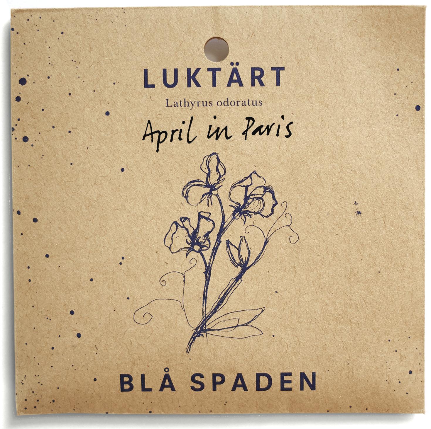 April in Paris - Violetta kanter på cremevita kronblad.Utmärkande doft.