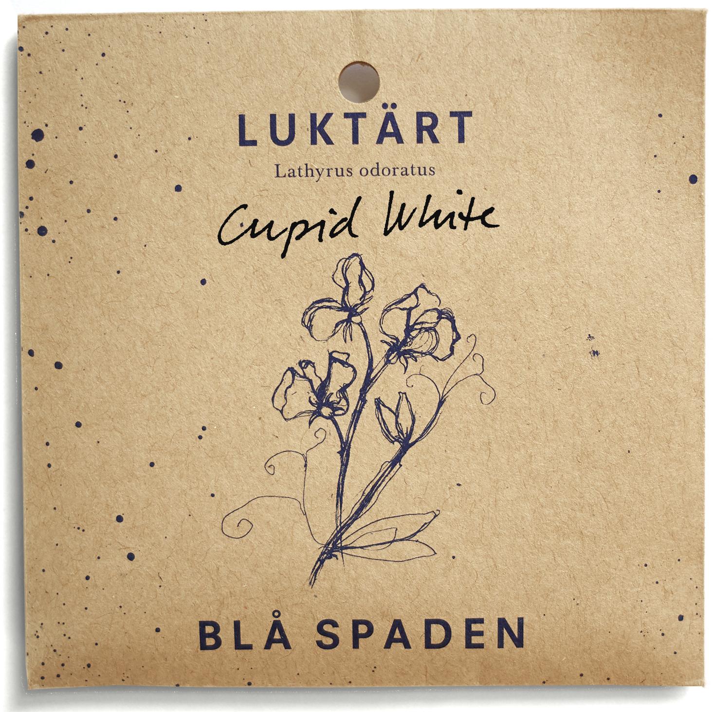 Cupid White - Snövit blom. Lågväxande. Passar bra i krukor,arrangemang och som marktäckare.