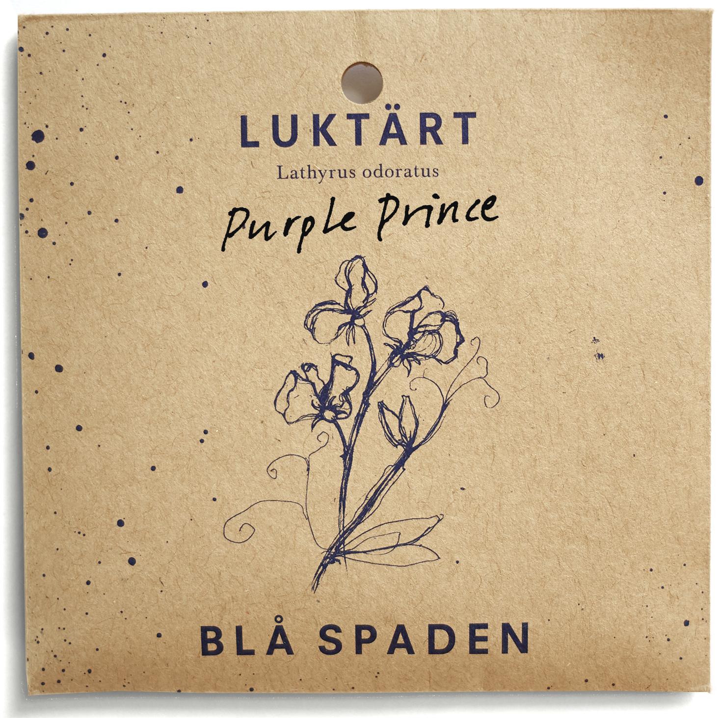 Purple Prince - Tvåfärgad luktärt i purpur och violett. Framtagen av Henry Eckford 1886.