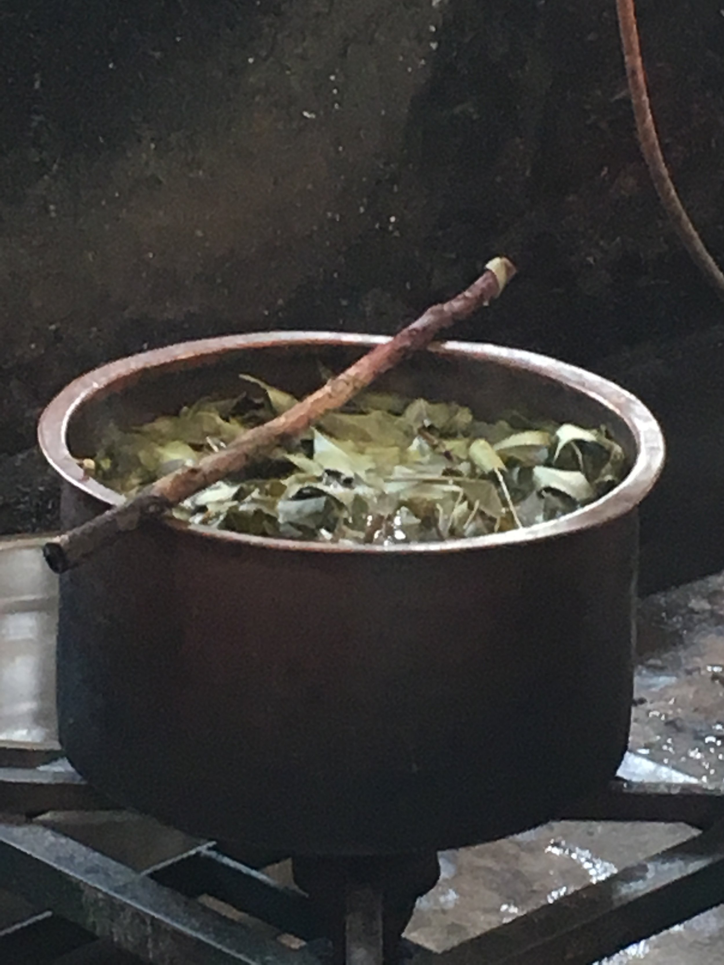 The leaves are boiled to extract the color
